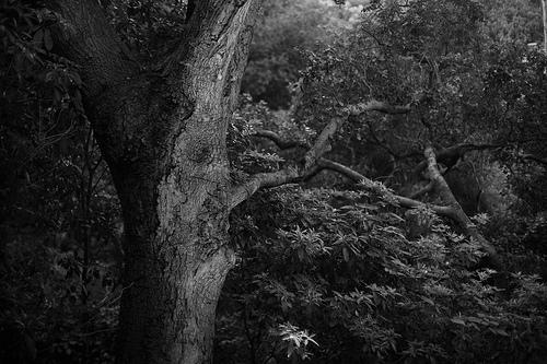 oak grove set. Palisades, CA