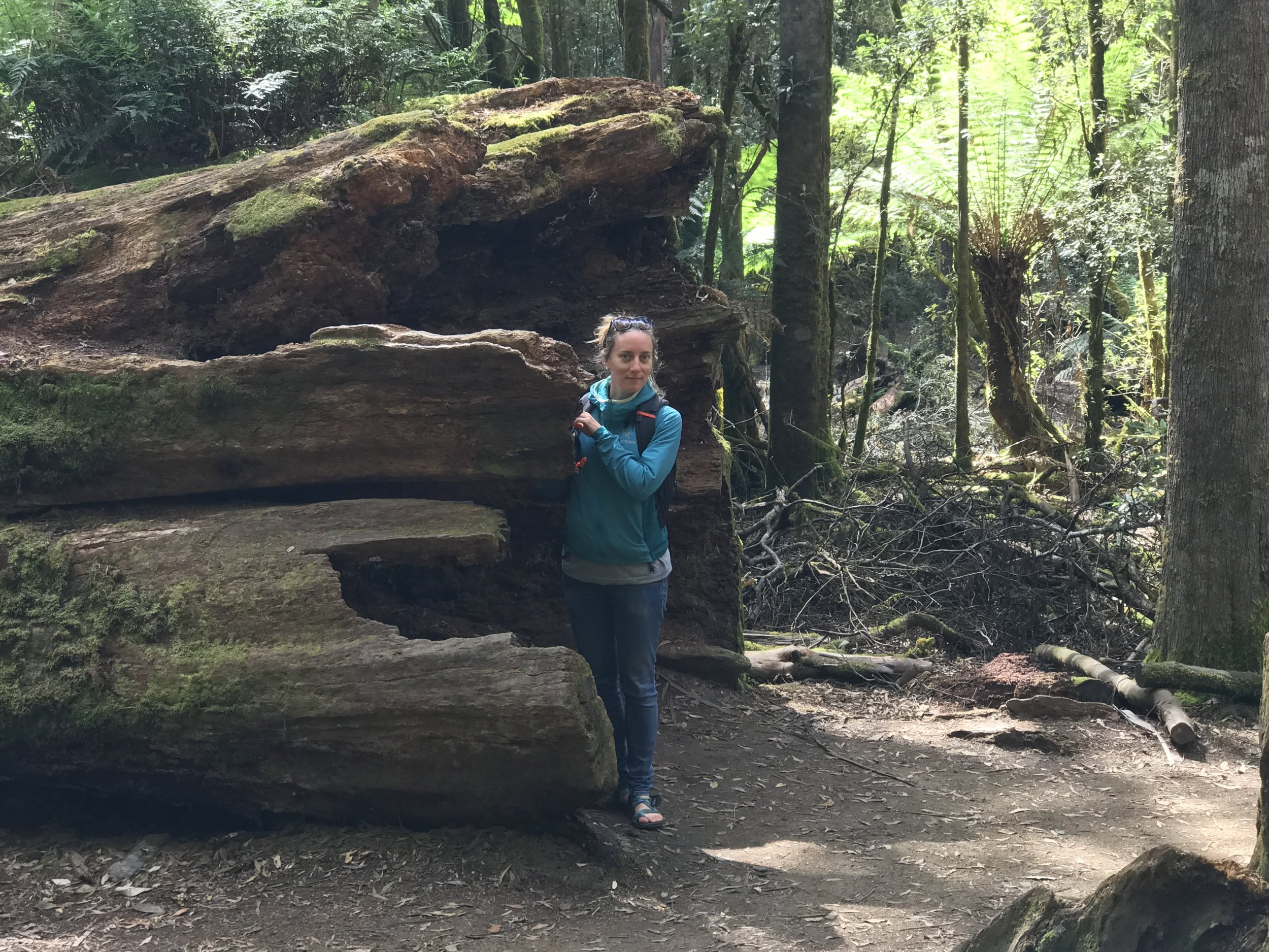 Jen in front of a much older tree fall