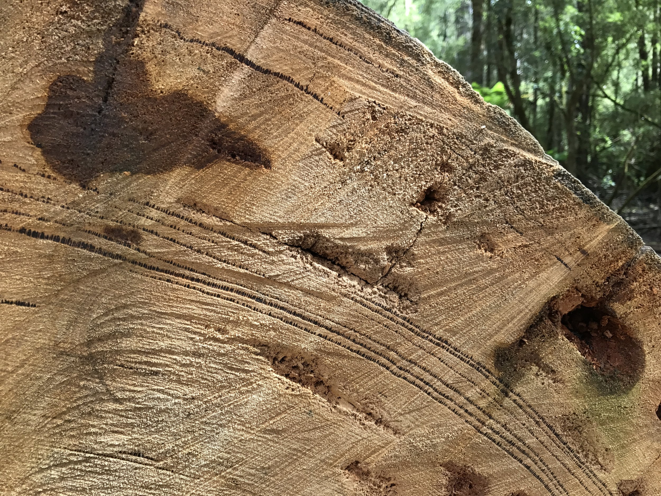 You can see the dark layers in the tree rings