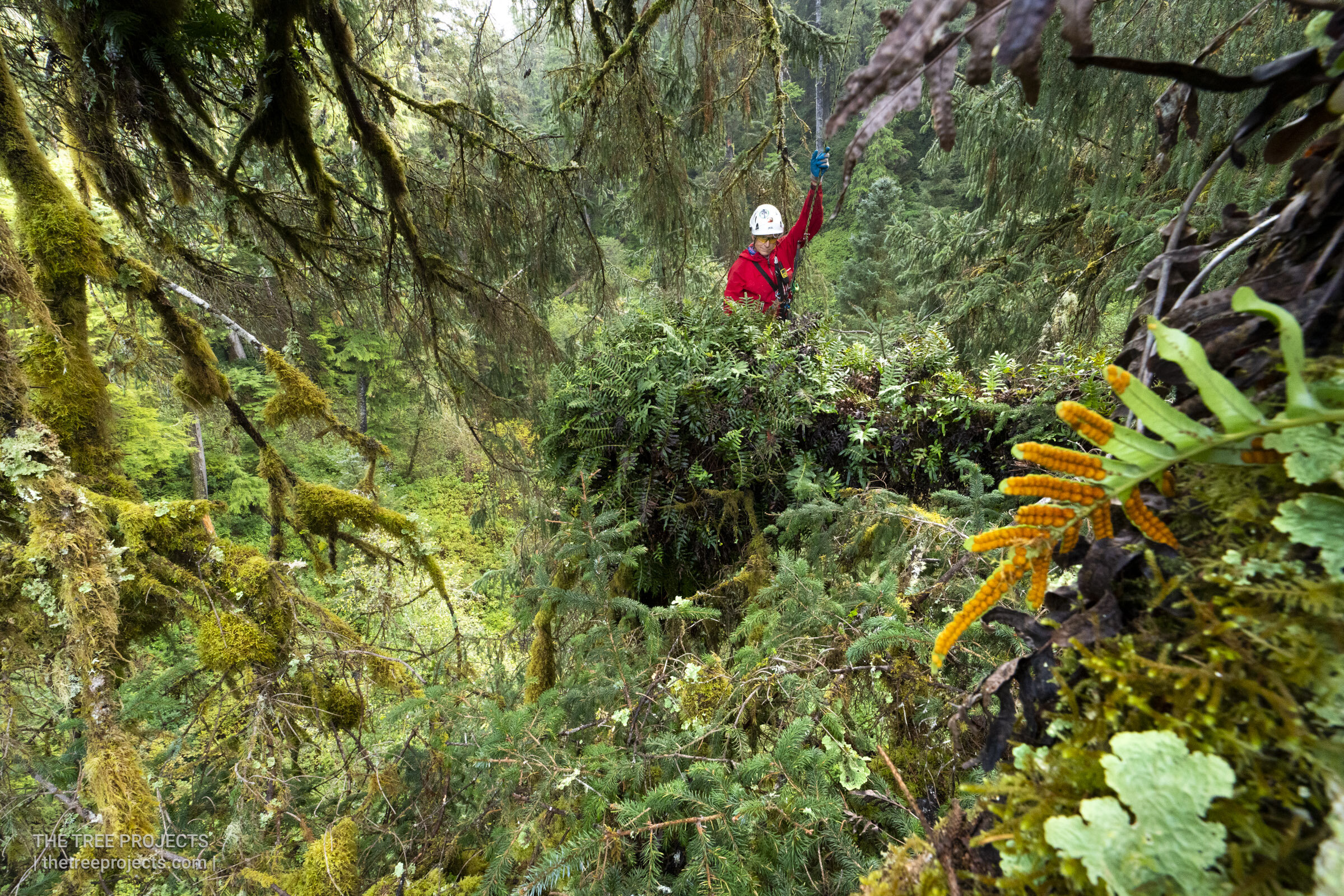 Sitka Forests