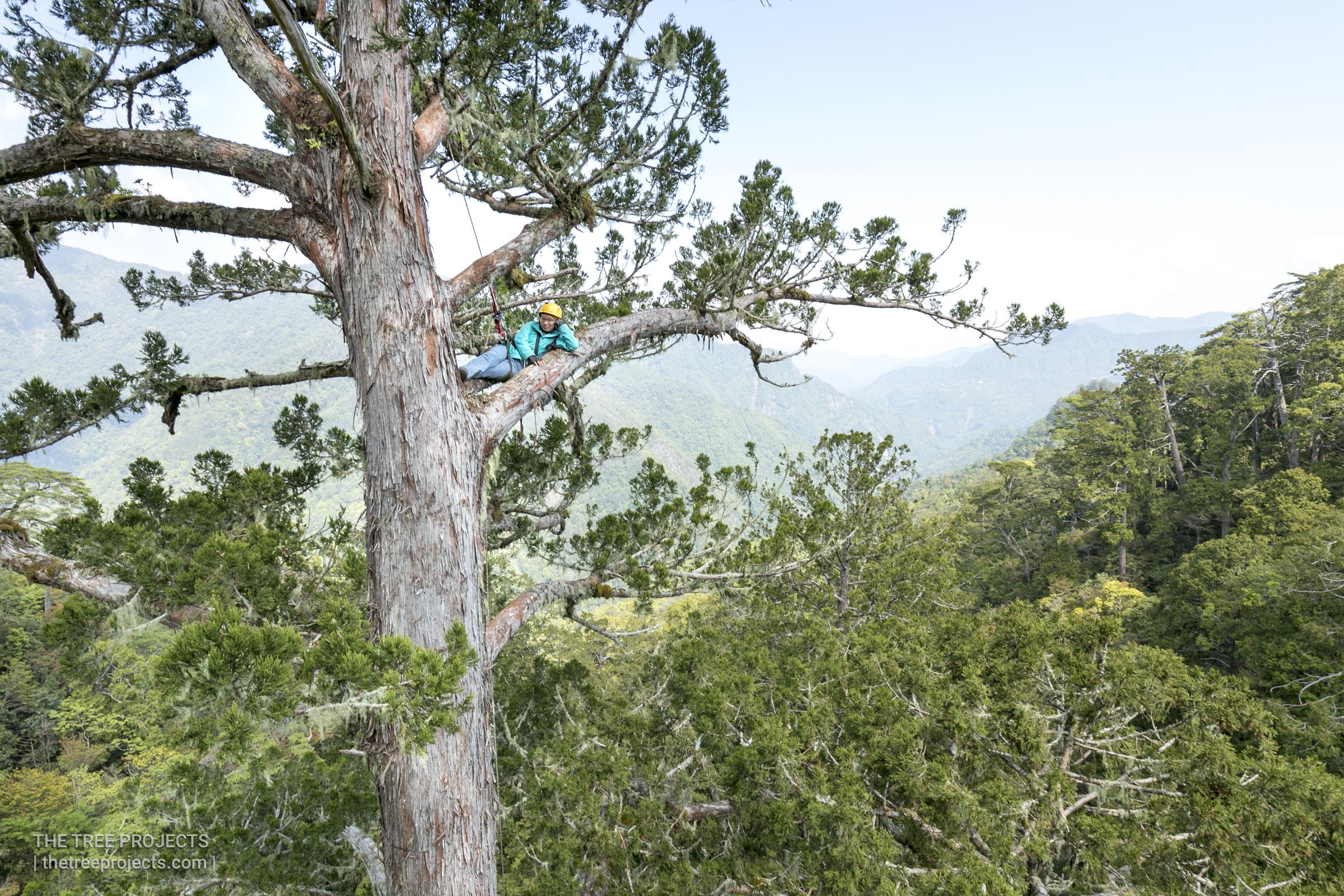 Taiwan-Tree-Project-2017-05-07-_5D40669.jpg