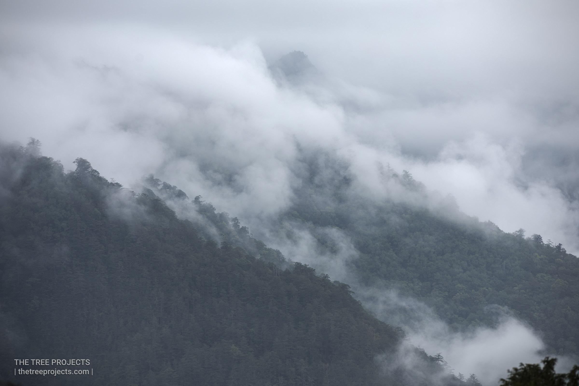 Taiwan-Tree-Project-20170425-S5D40008-Edit.jpg