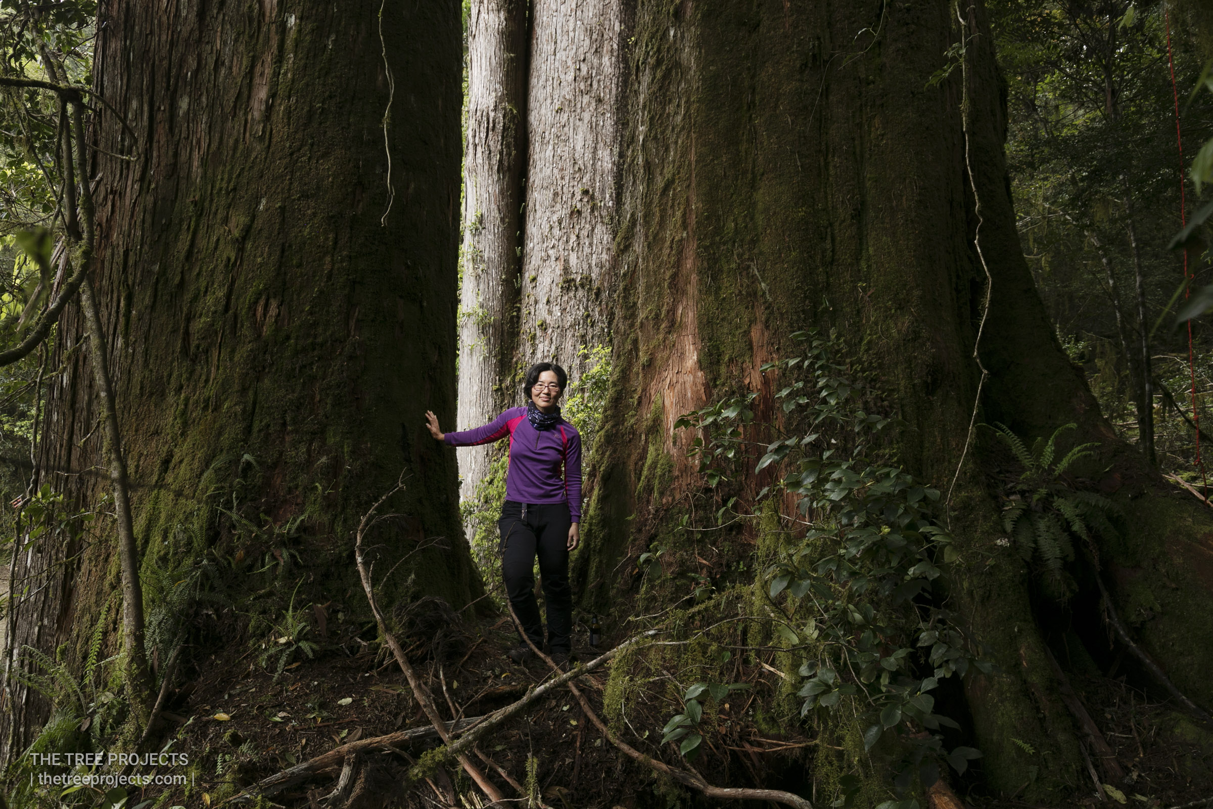 Taiwan-Tree-Project-20170506-_5D40025.jpg