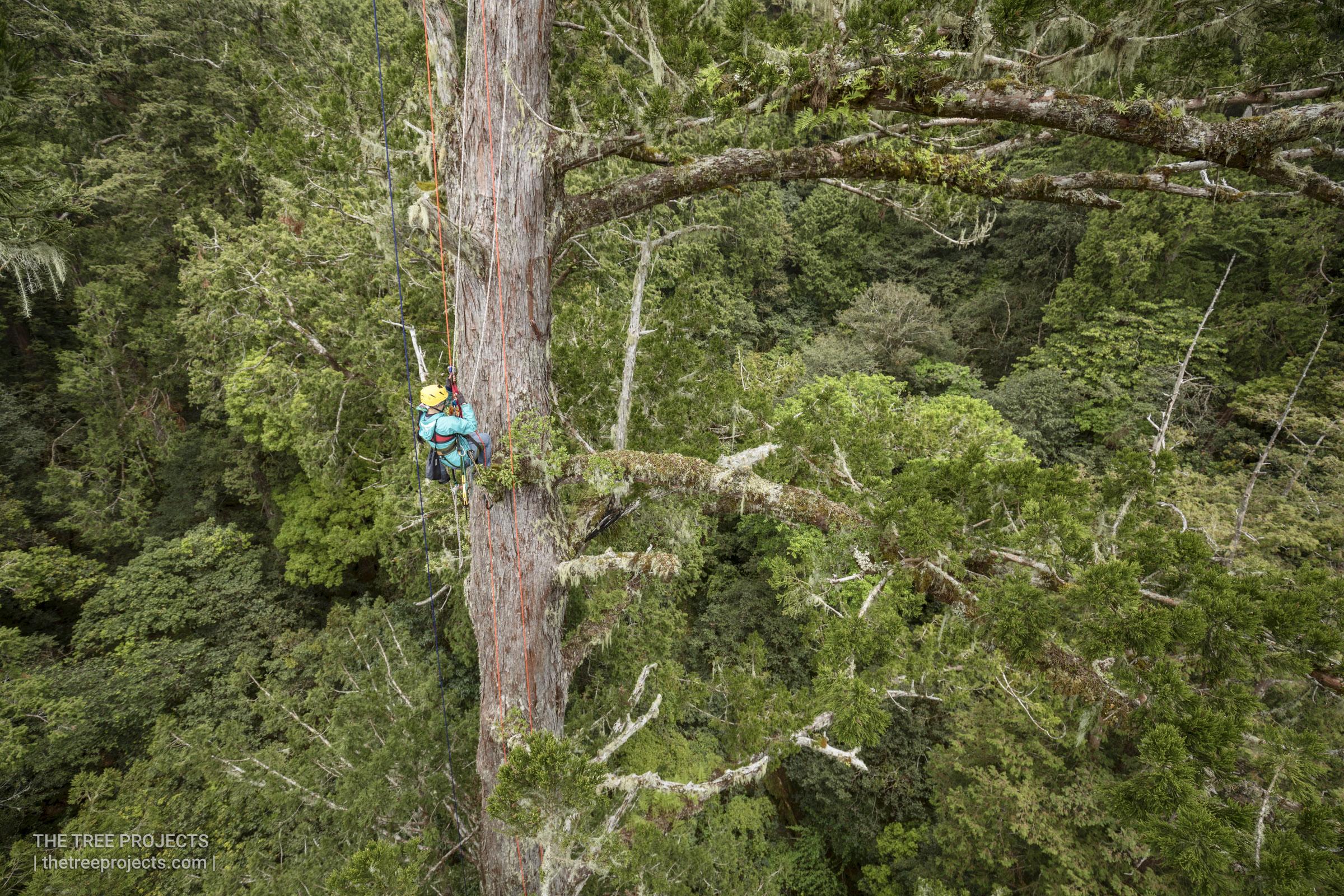 Taiwan-Tree-Project-201705052017-05-05-_5D41157.jpg