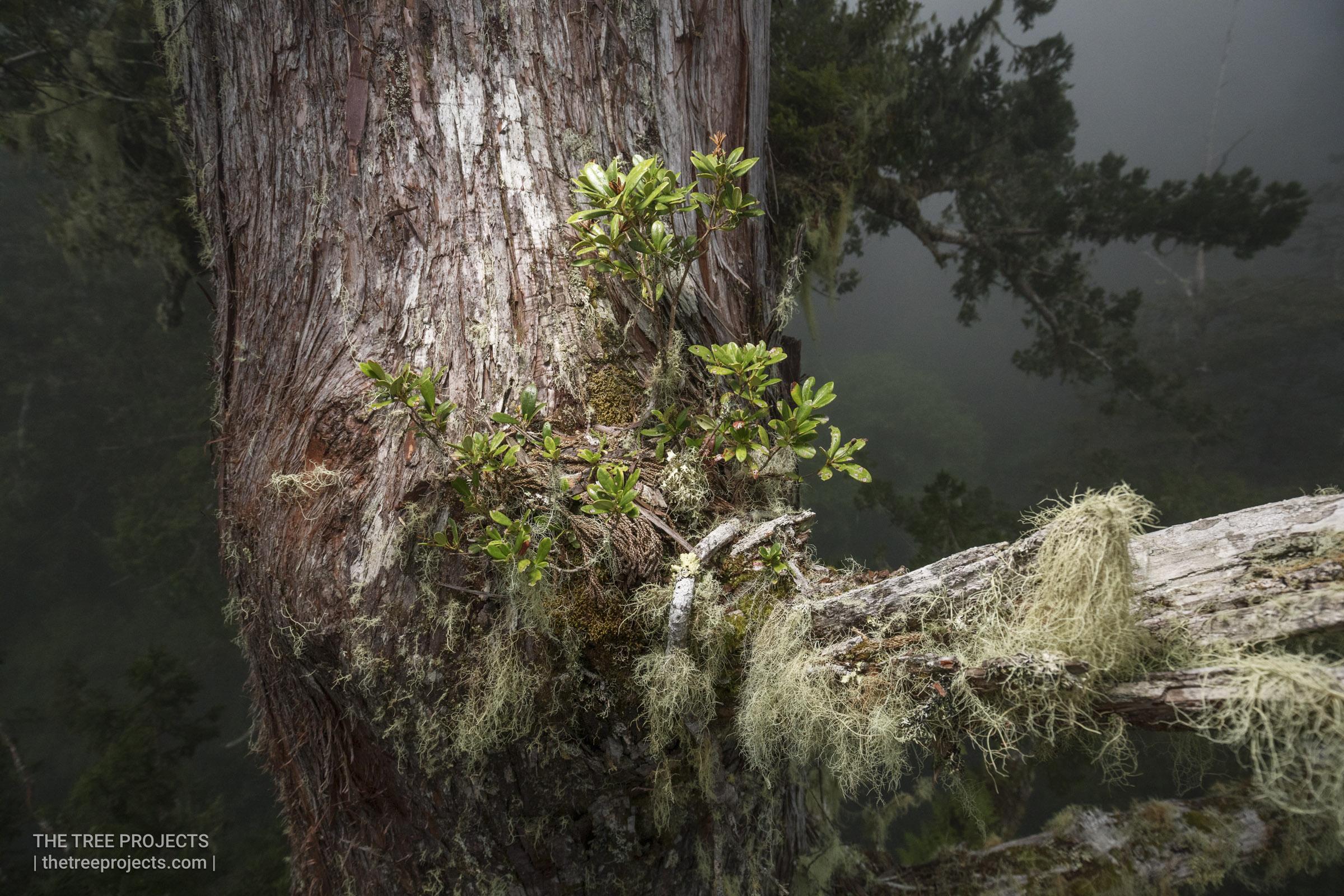 Taiwan-Tree-Project-201705052017-05-05-_5D41477.jpg