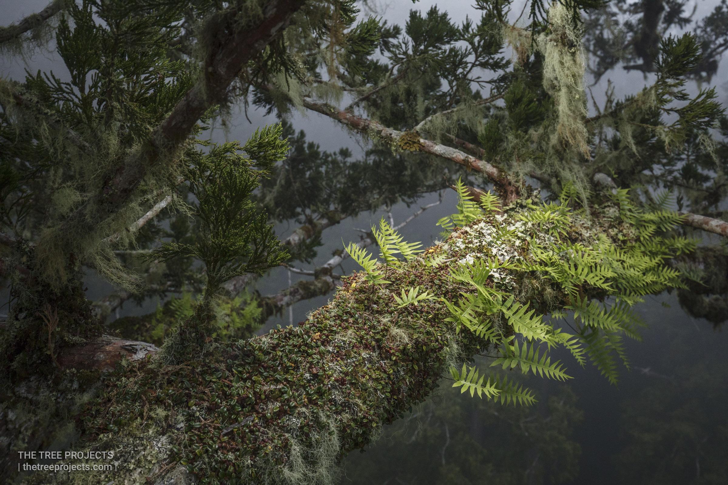 Taiwan-Tree-Project-201705052017-05-05-_5D41589.jpg