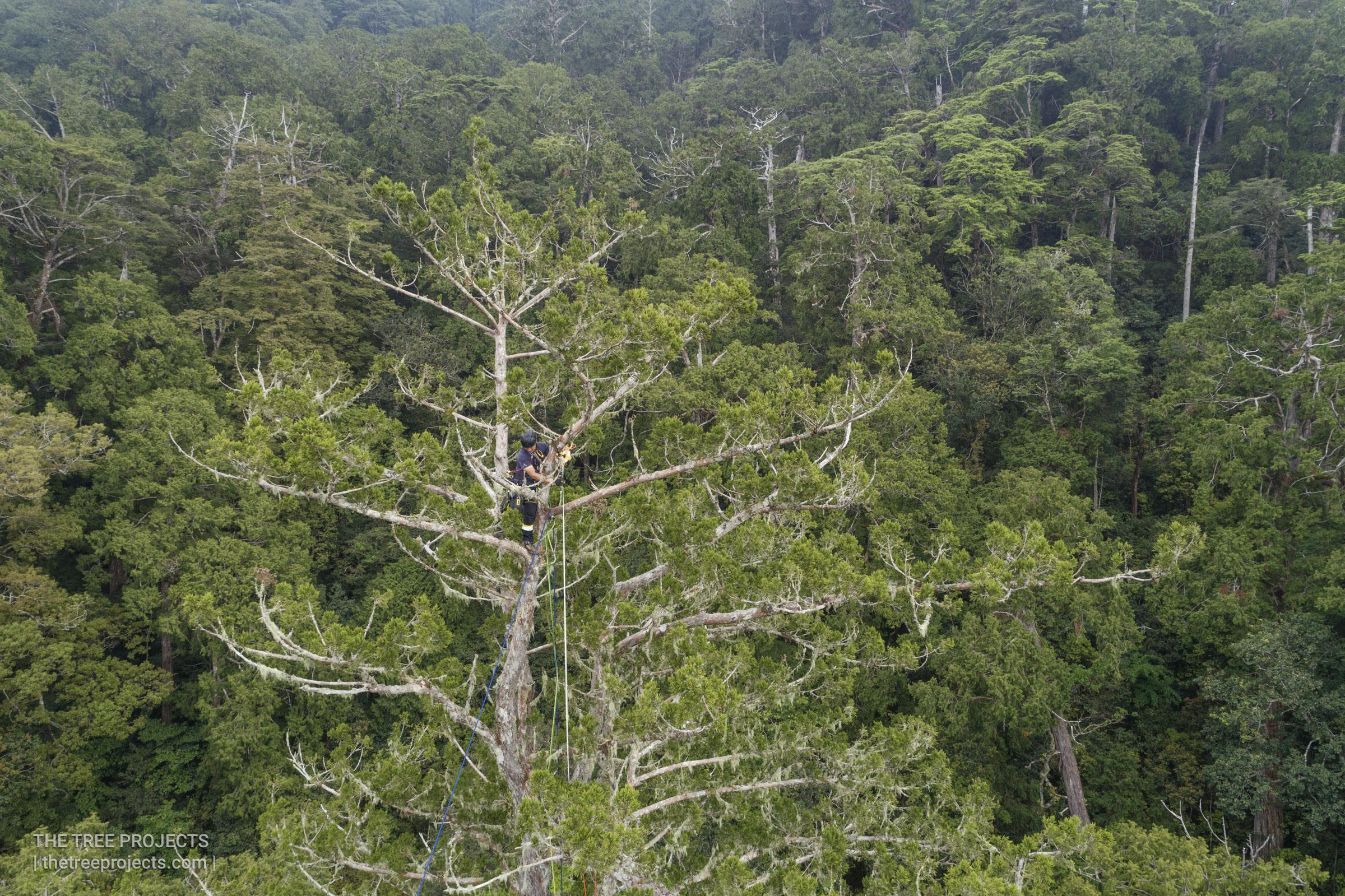 Taiwan-Tree-Project-2017050620170506-DJI_0016.jpg