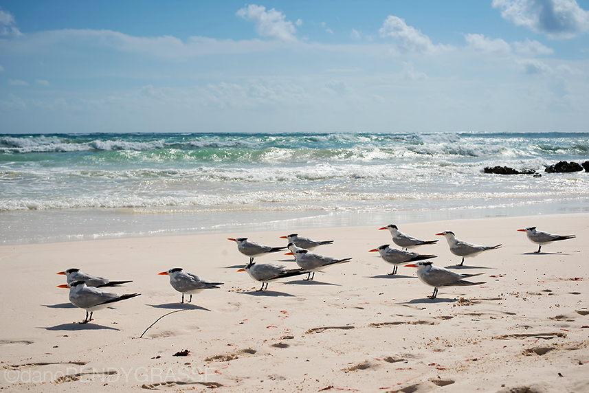 tulum-dano-pendygrasse-birds.png