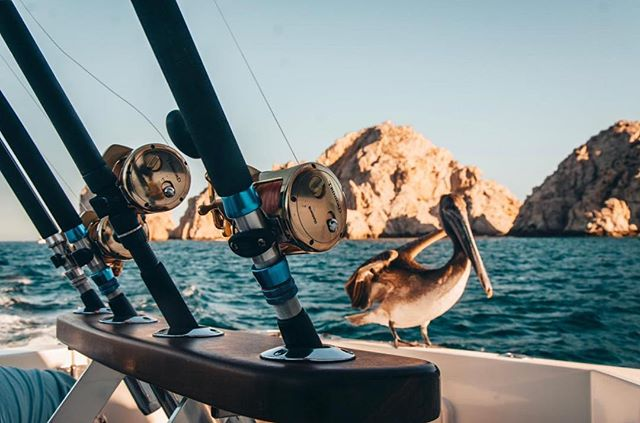 Bird boat. Heading down soon for a whole bunch of fishing and sun. Photo by our friend in Cabo @ricardorosales.photography