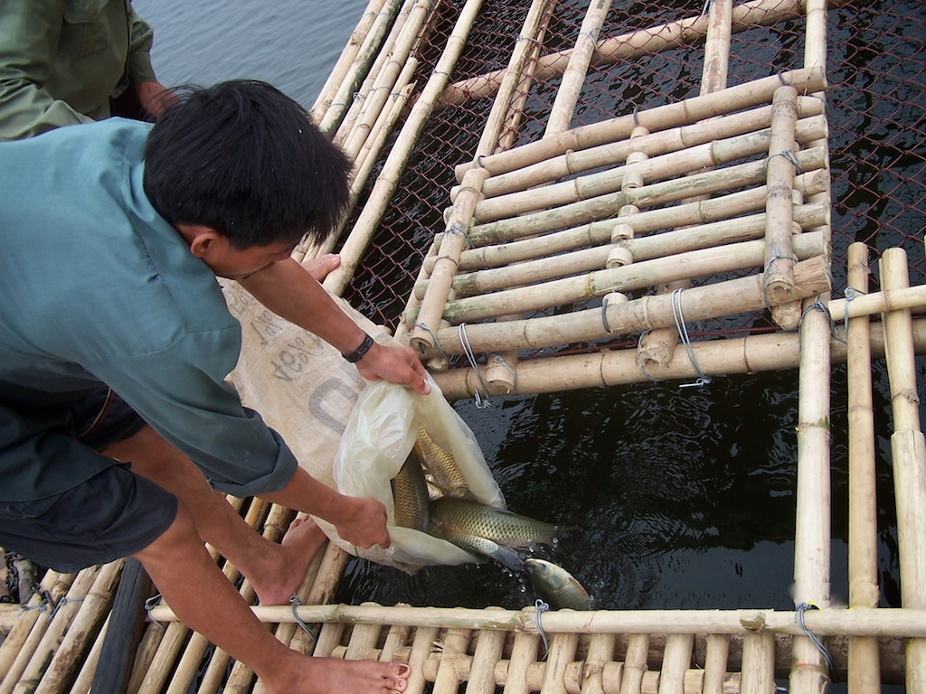Fish Cage Web 4 007.jpg