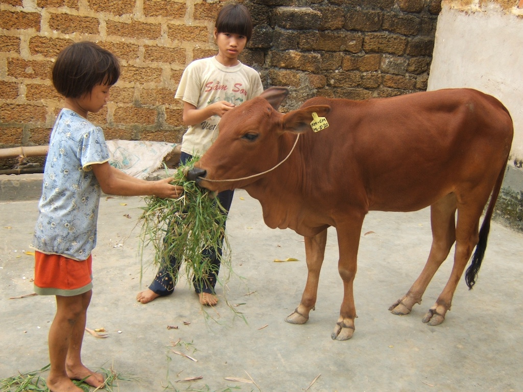 Cow Web 3 009.jpg