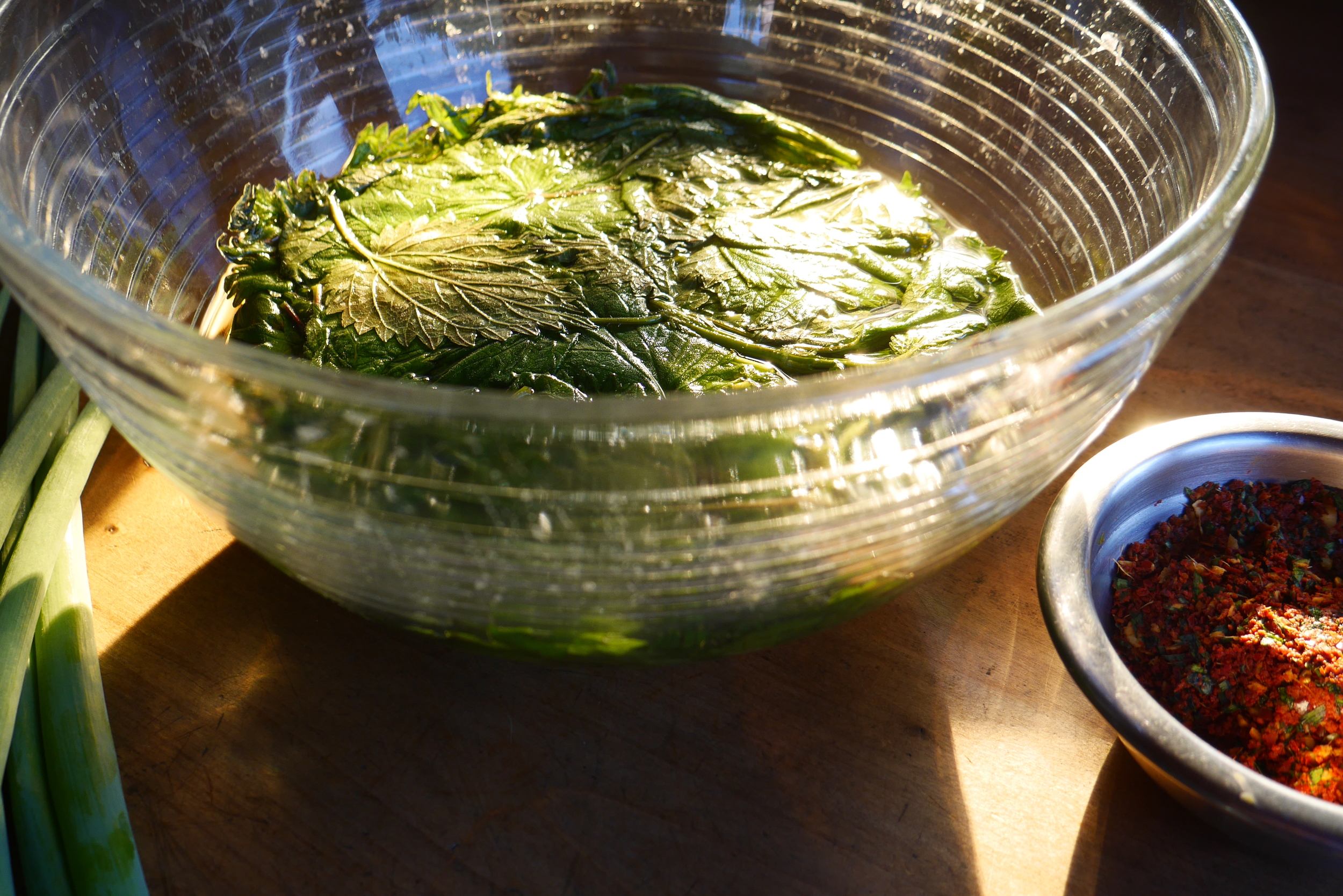 The morning after...nettle leaves soaking in a brine bath overnight—ready to become kimchi.