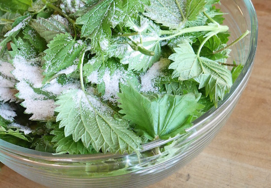 Fermented Nettle Pesto