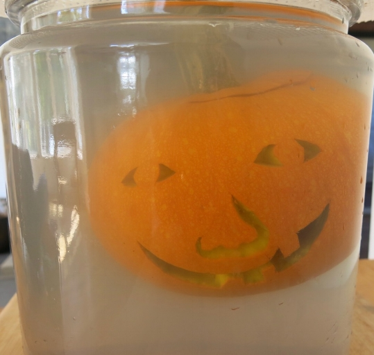 Fermenting pumpkins and other winter squash