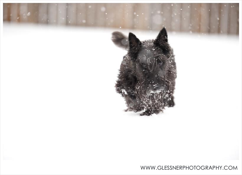 ^That's Monty, our little Winter Olympian wannabe. Unfortunately, he isn't very aerodynamic.
