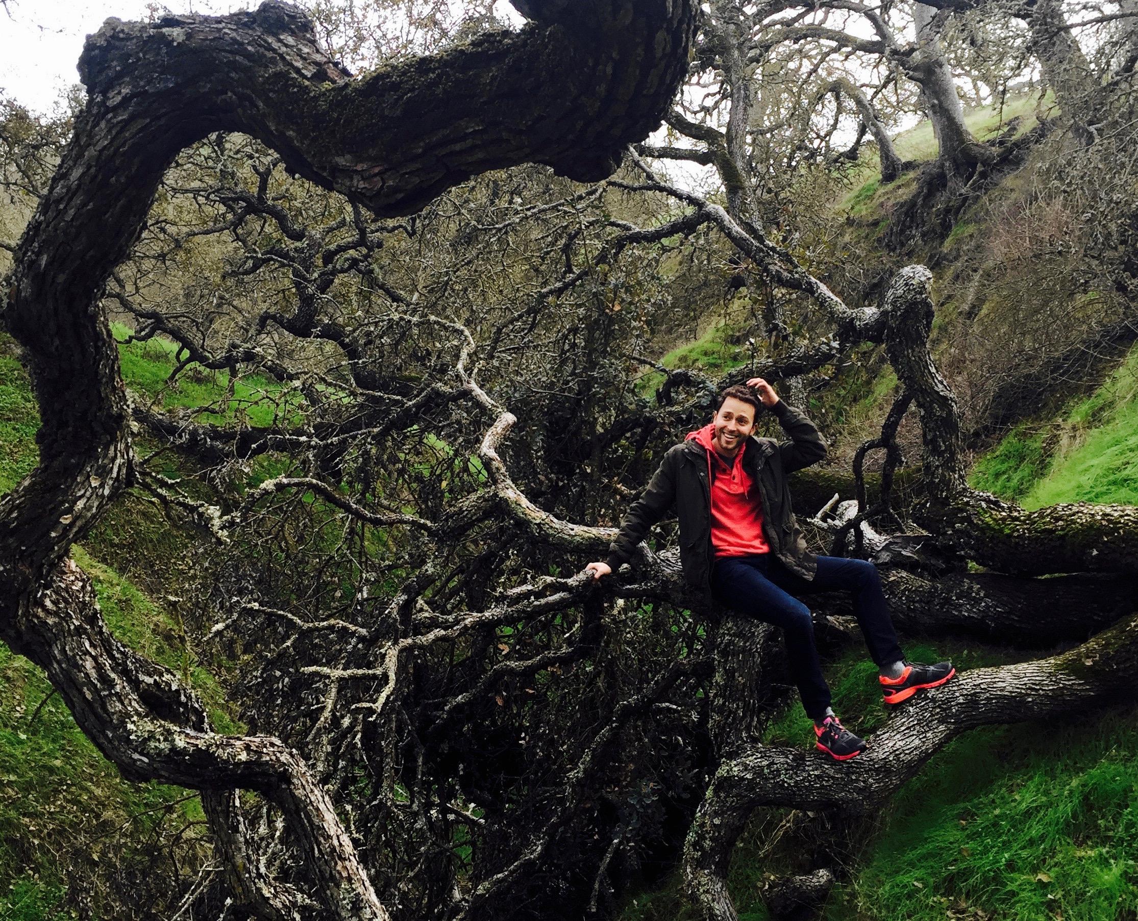 Benjamin Tree Crop.jpg