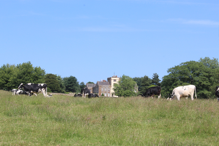 View to Canons Ashby House from the 'Deer Park'.