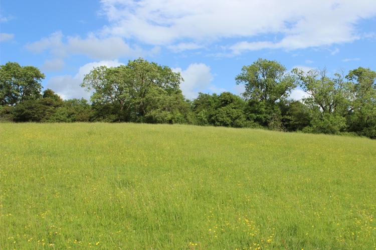 Burledge Hillfort