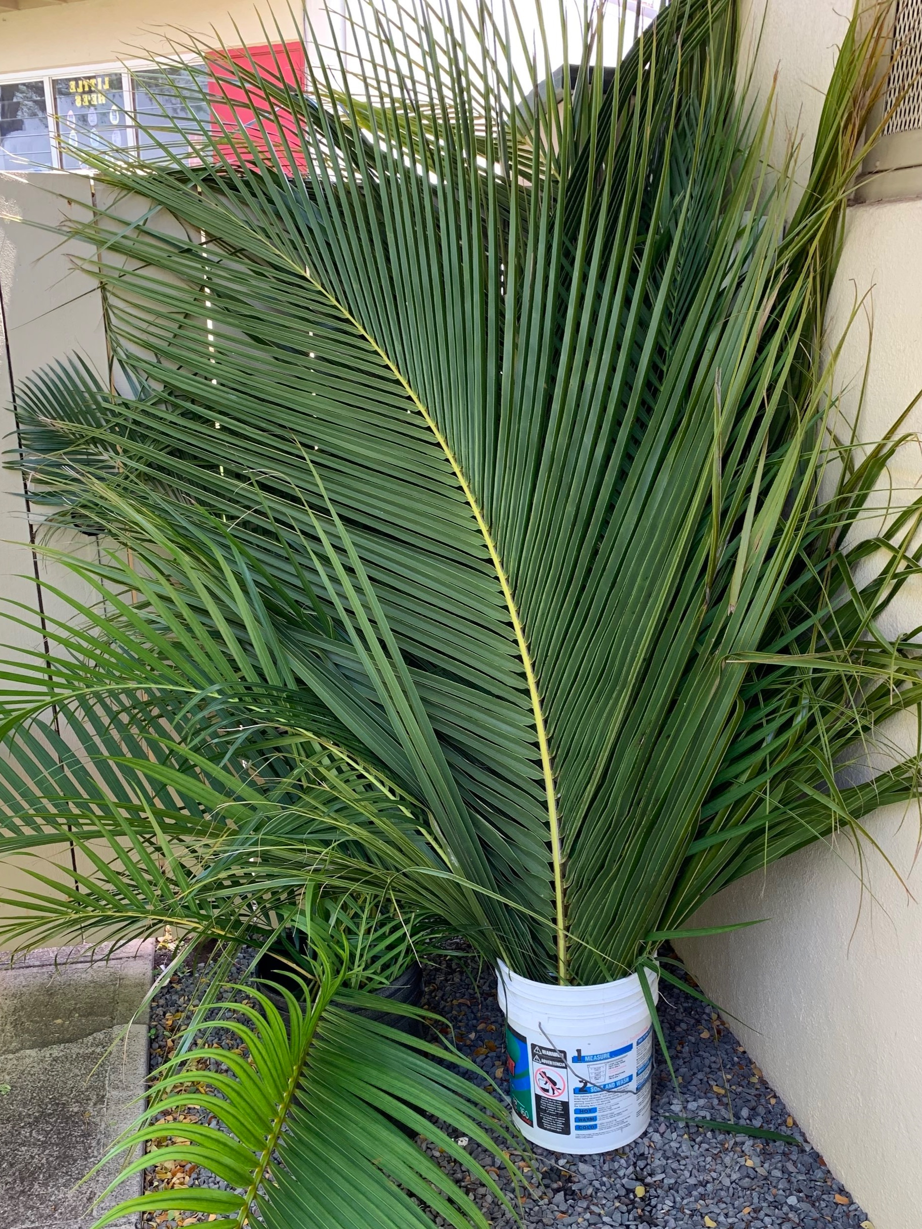 Sunday's Palms