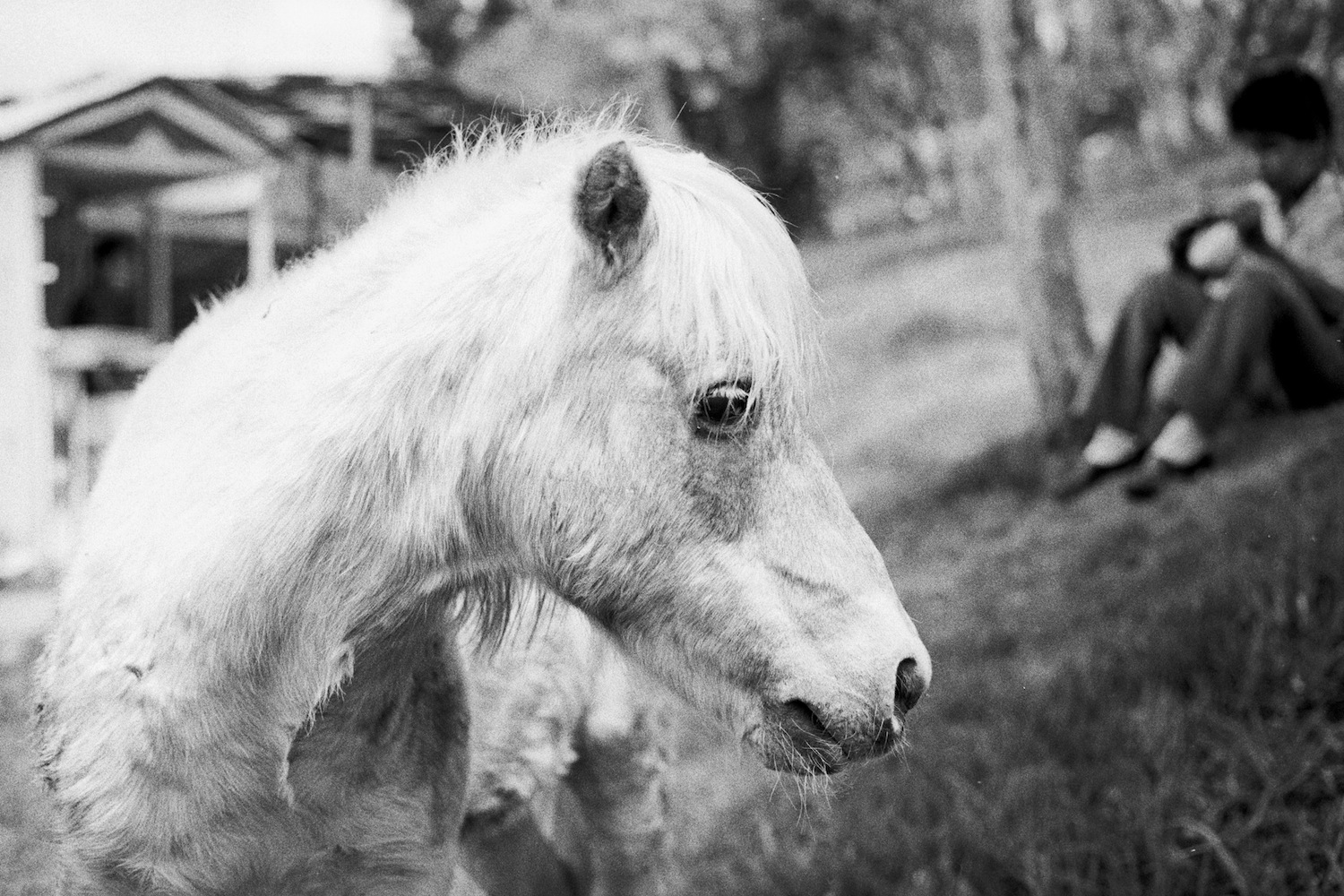 Shot with a Nikon F3 in Mexico. The boy in the background worked at the stable and was taking a break.