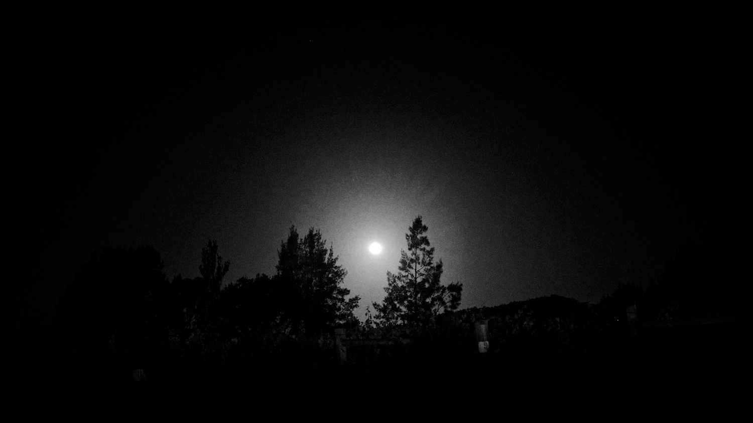 The moonlight hitting a few trees in the Hunter Valley, NSW, one of Australia's wine regions.