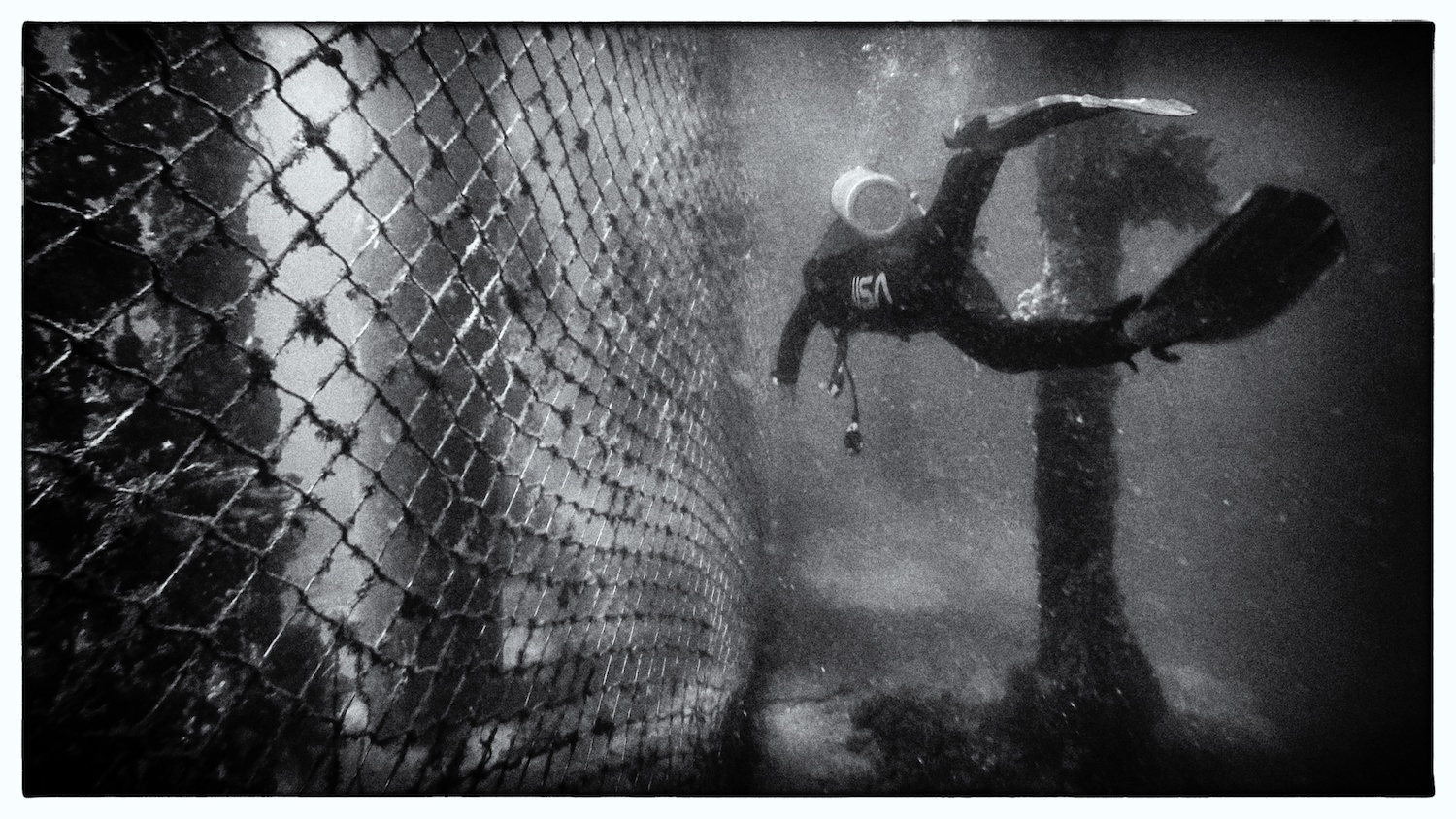 A scuba diver in Sydney explores the outer side of a shark fence built to protect swimmers at the nearby beach.