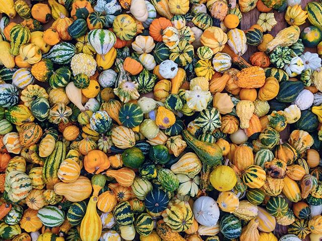 #squashing in as many #squashes as possible. . .  #squash #pumpkin #why #colors #yellow #fruit #strangerthings