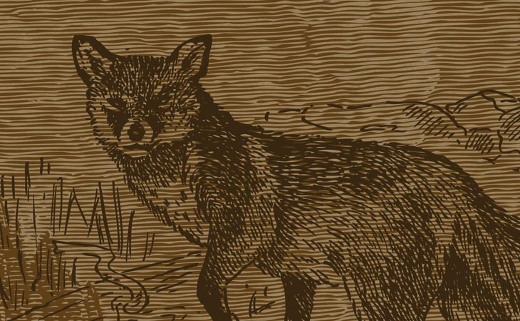 fox_poster_02.jpg