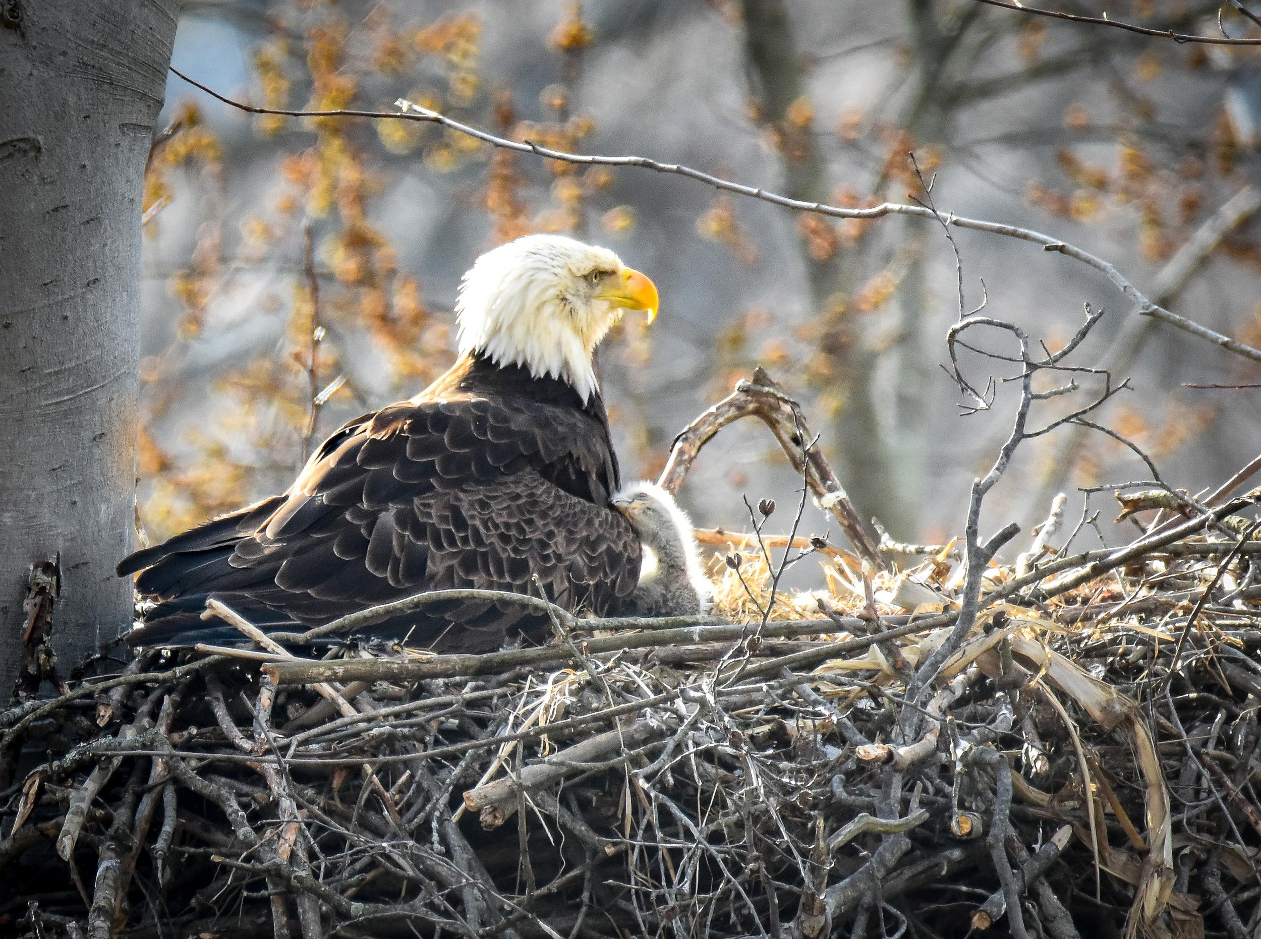 eaglesnuggles.jpg