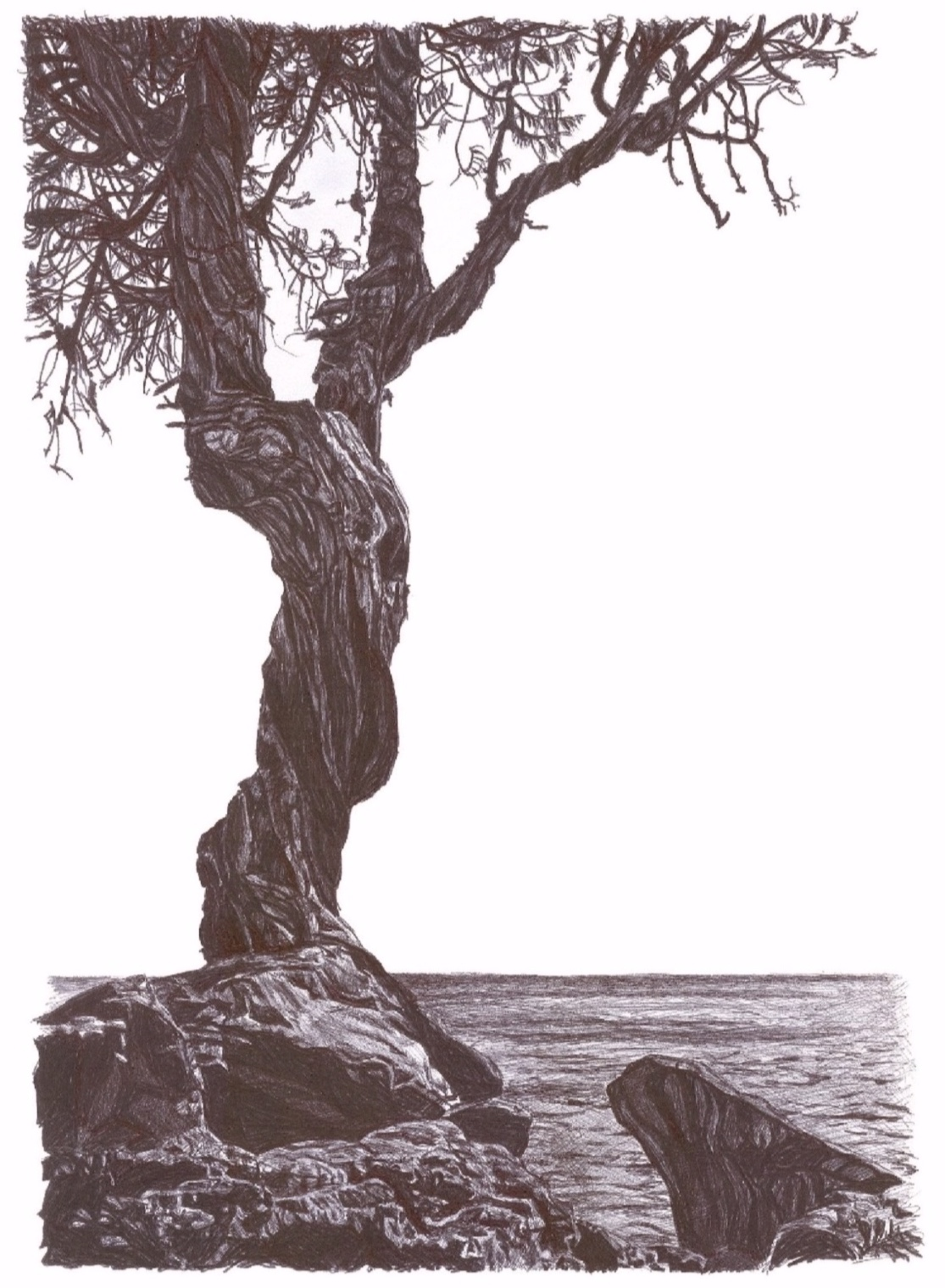 Obrien_Spirit_Tree_Card%252B%2525281%252529.jpg