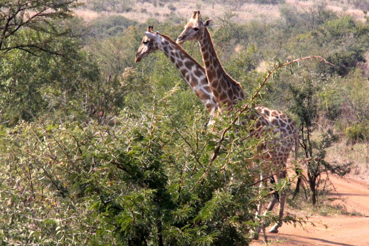 Gariffe South Africa