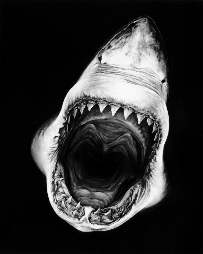 Robert Long Shark.jpg