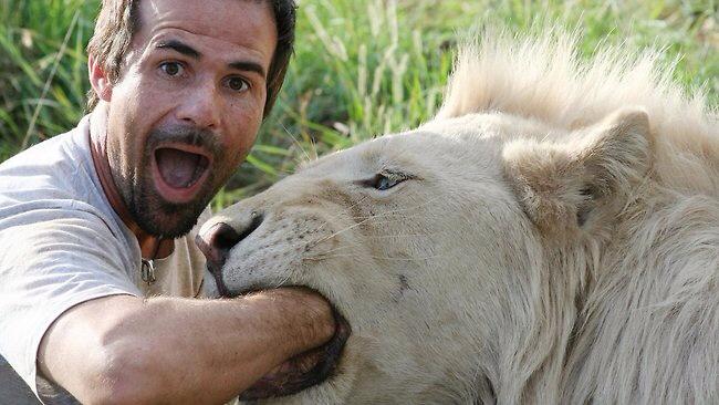 lion-BOKEHinc.jpg