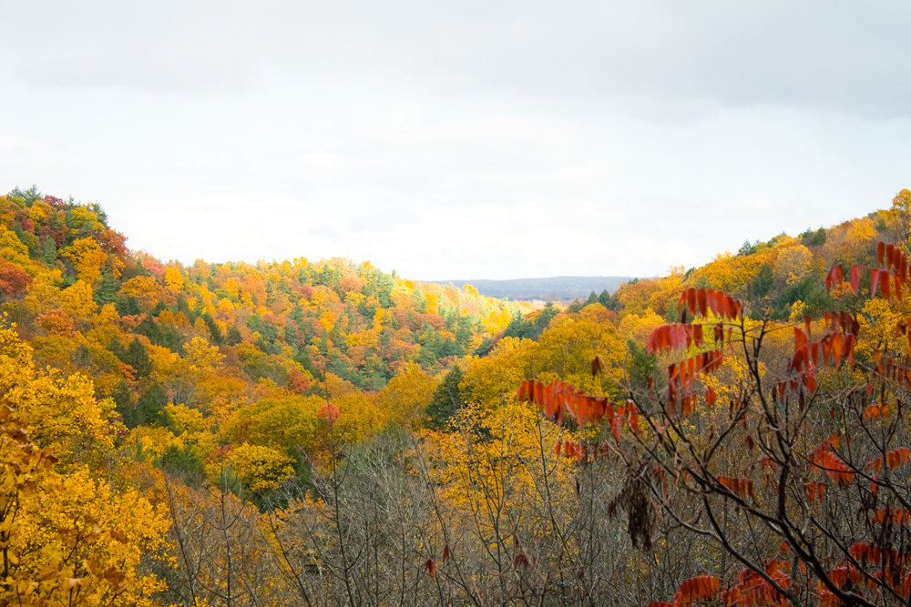 Fall-Color.jpg