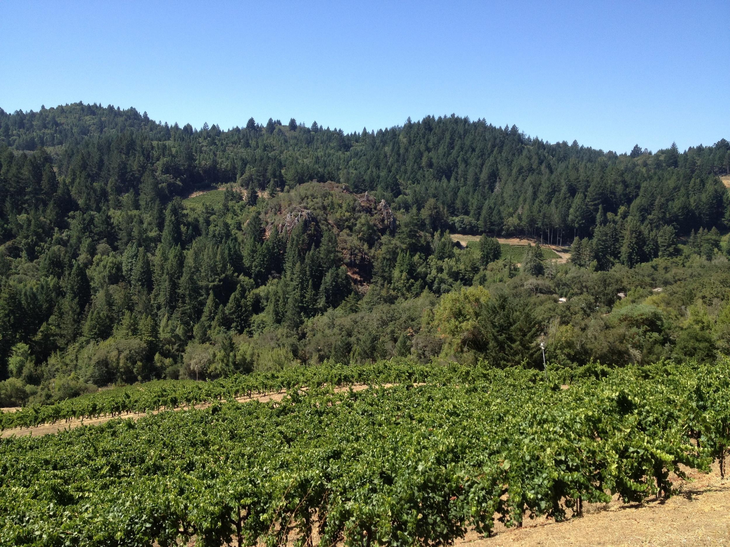 wine country life (1).jpg