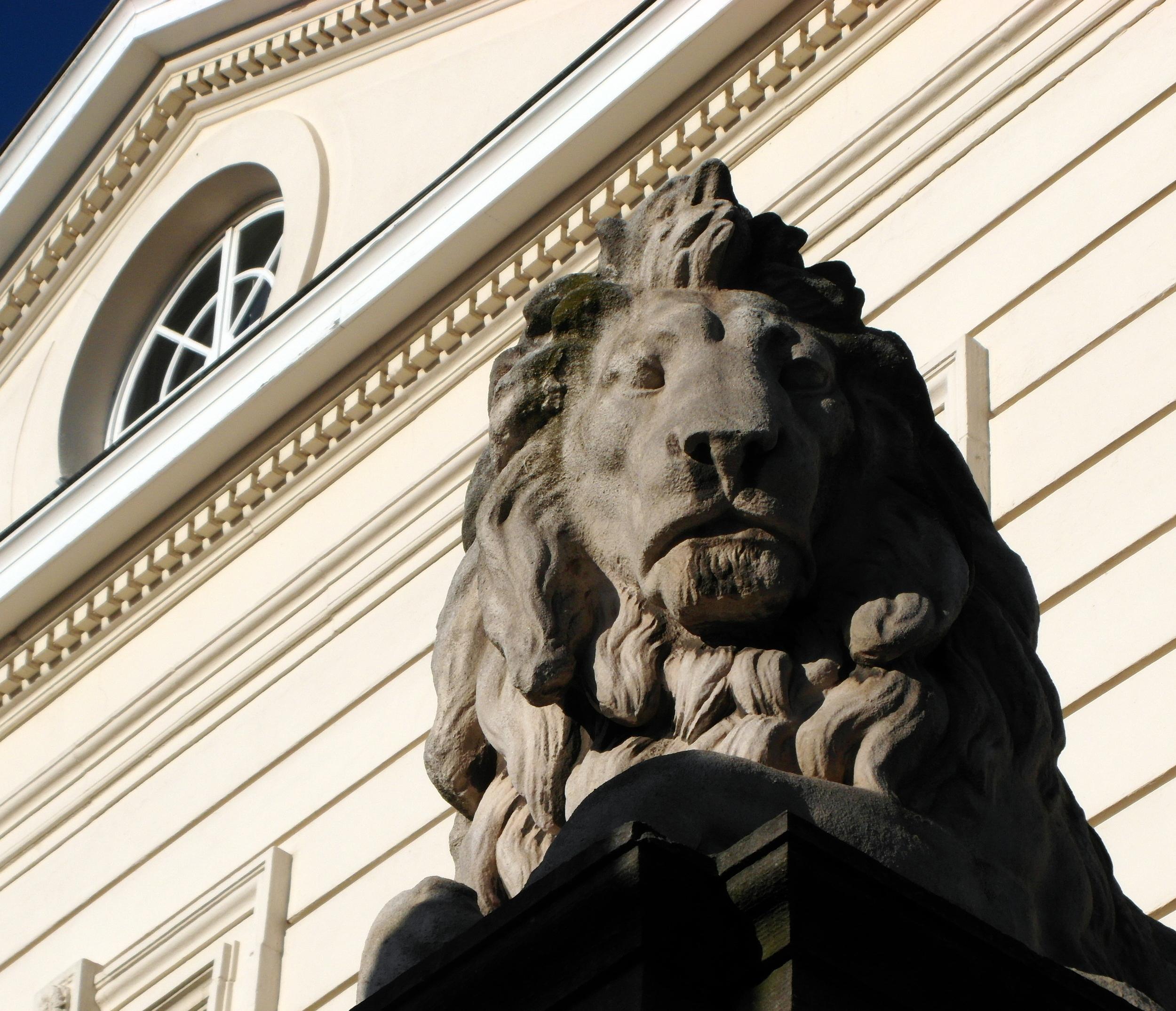 Lion_SAM_1374.JPG