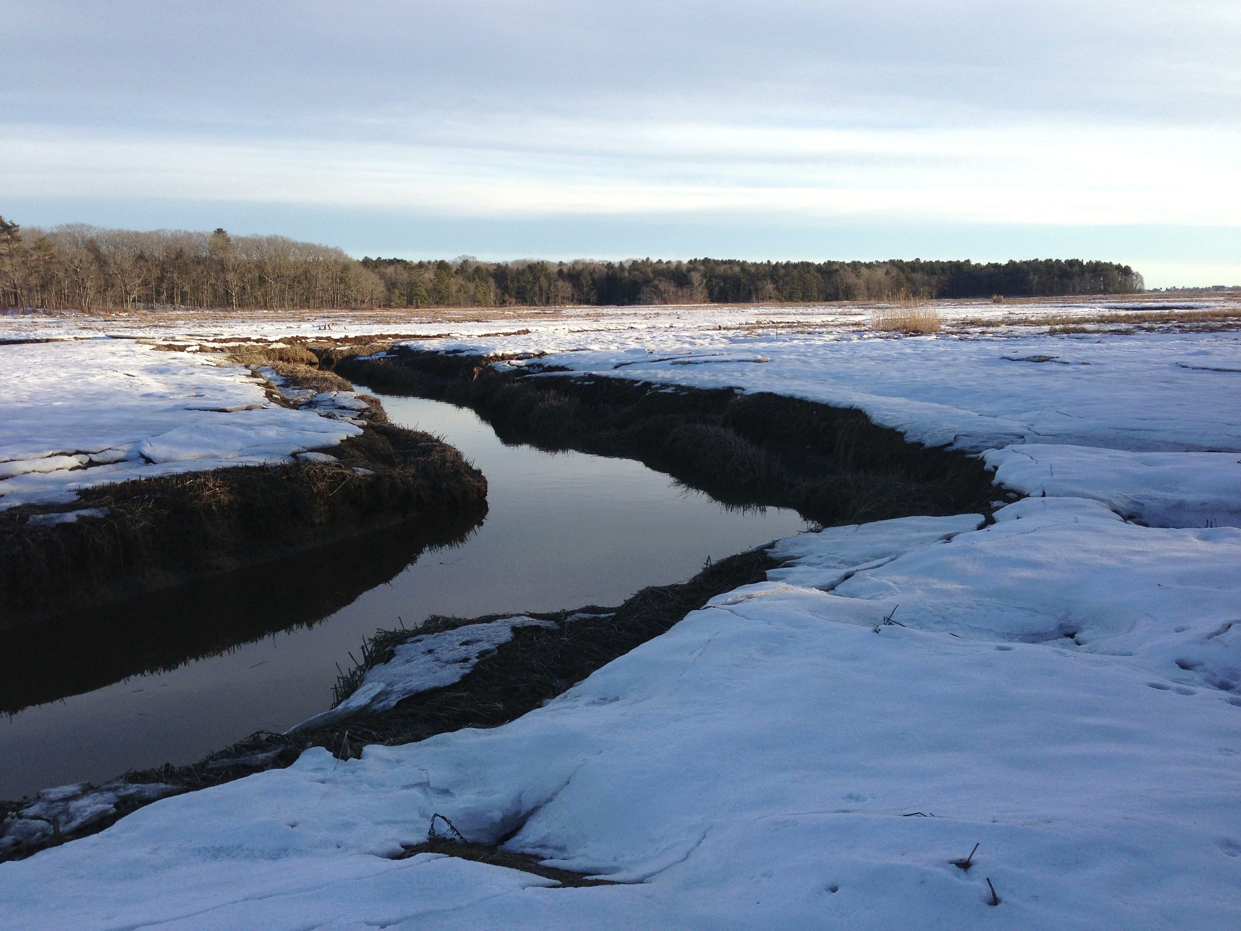 Scarborough Marsh2.jpg