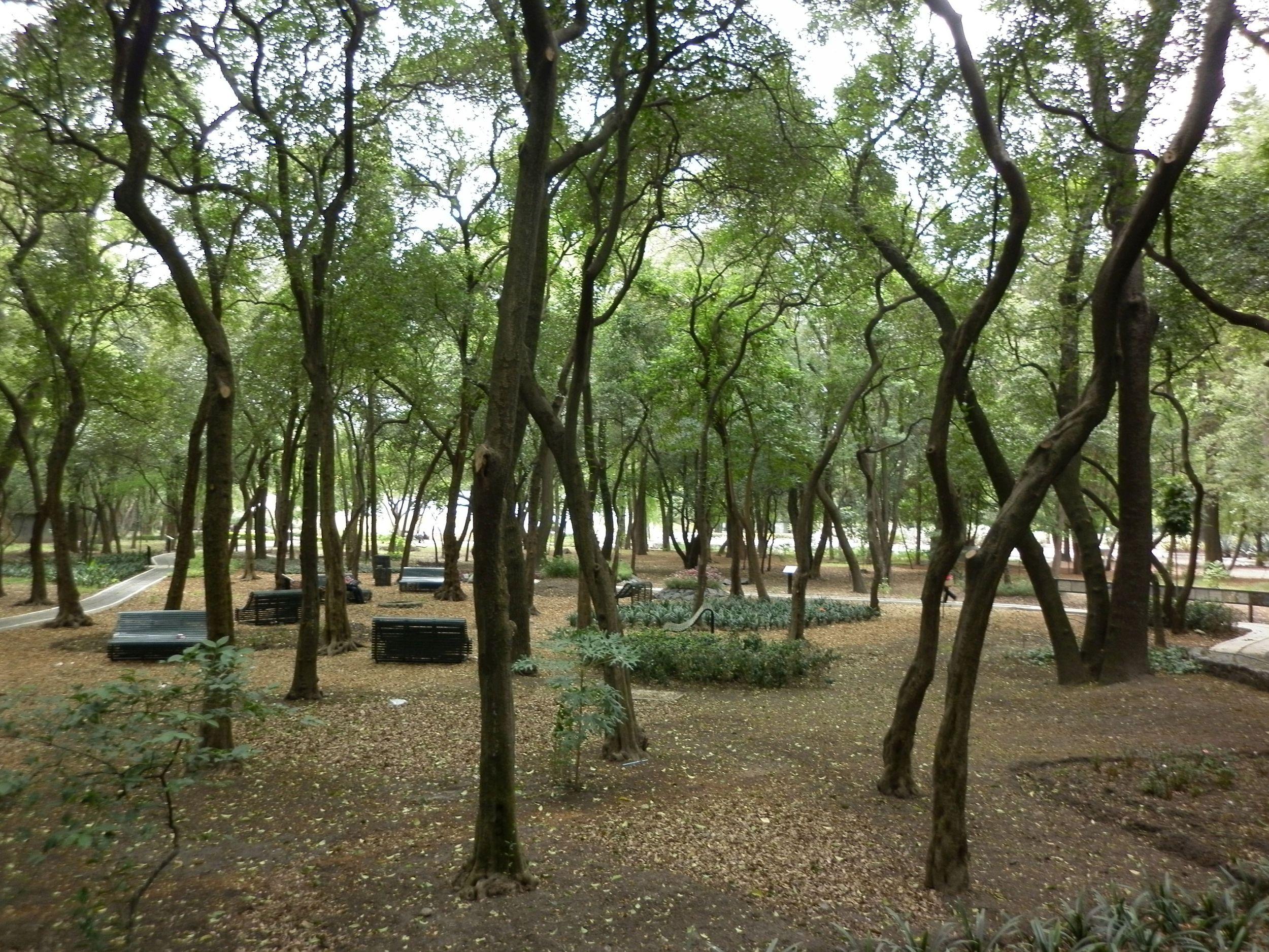 chapultepec park.jpg