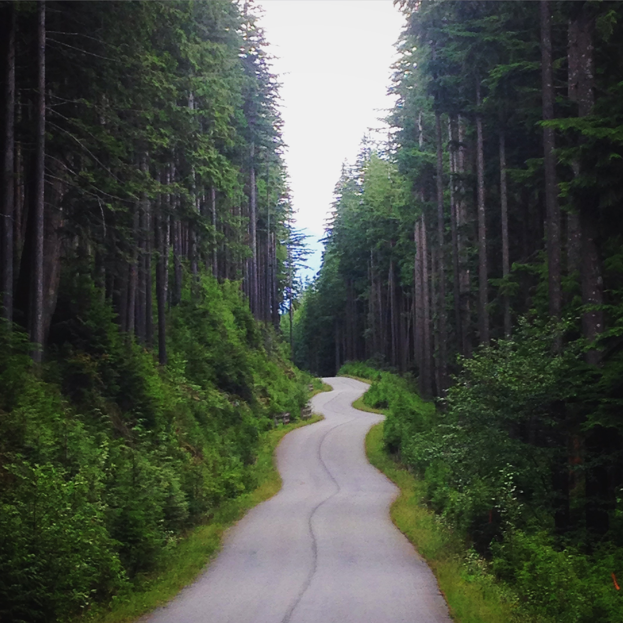 VancouverForest.JPG