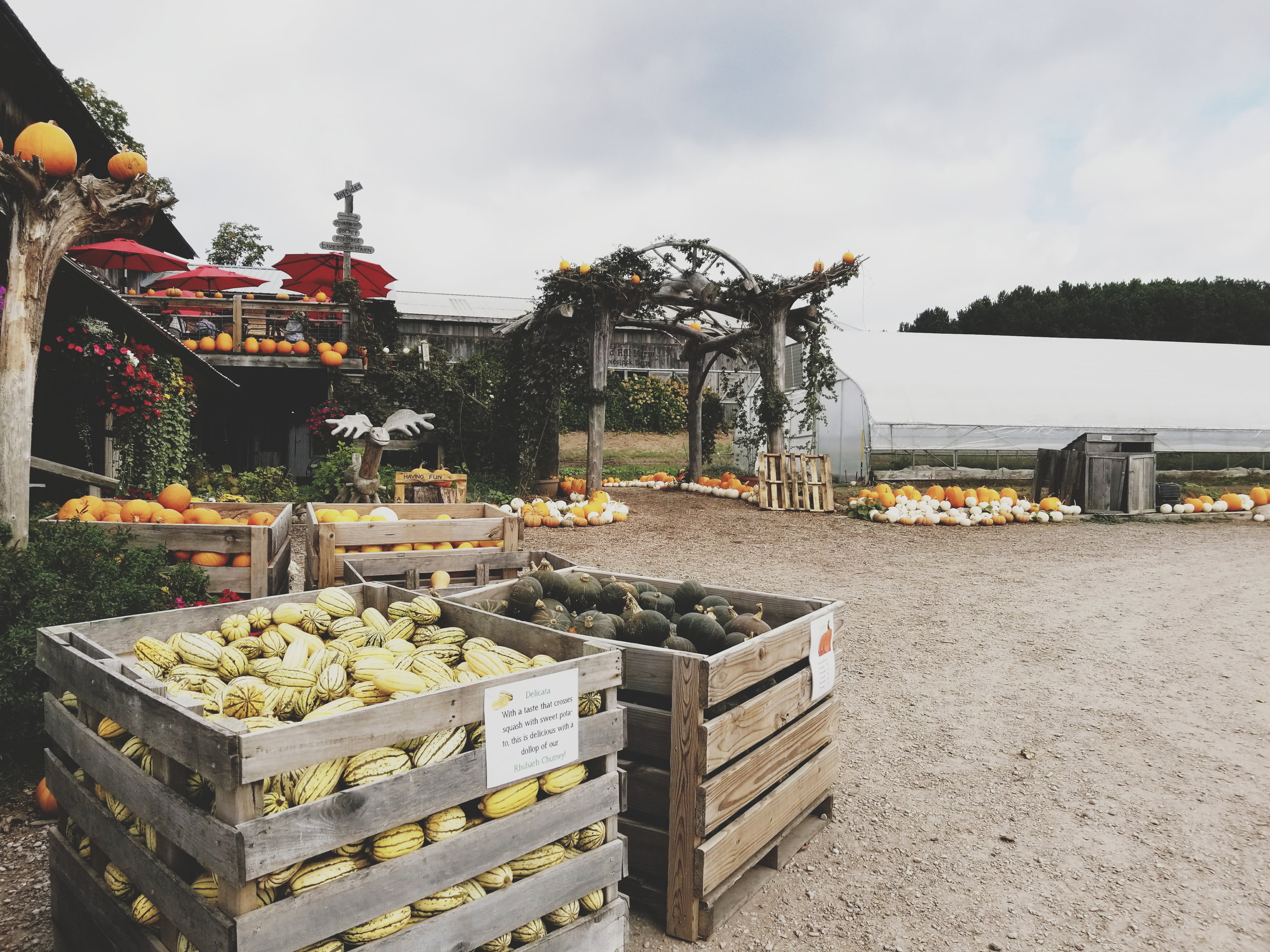 Harvest at Pond Hill Farm.jpg