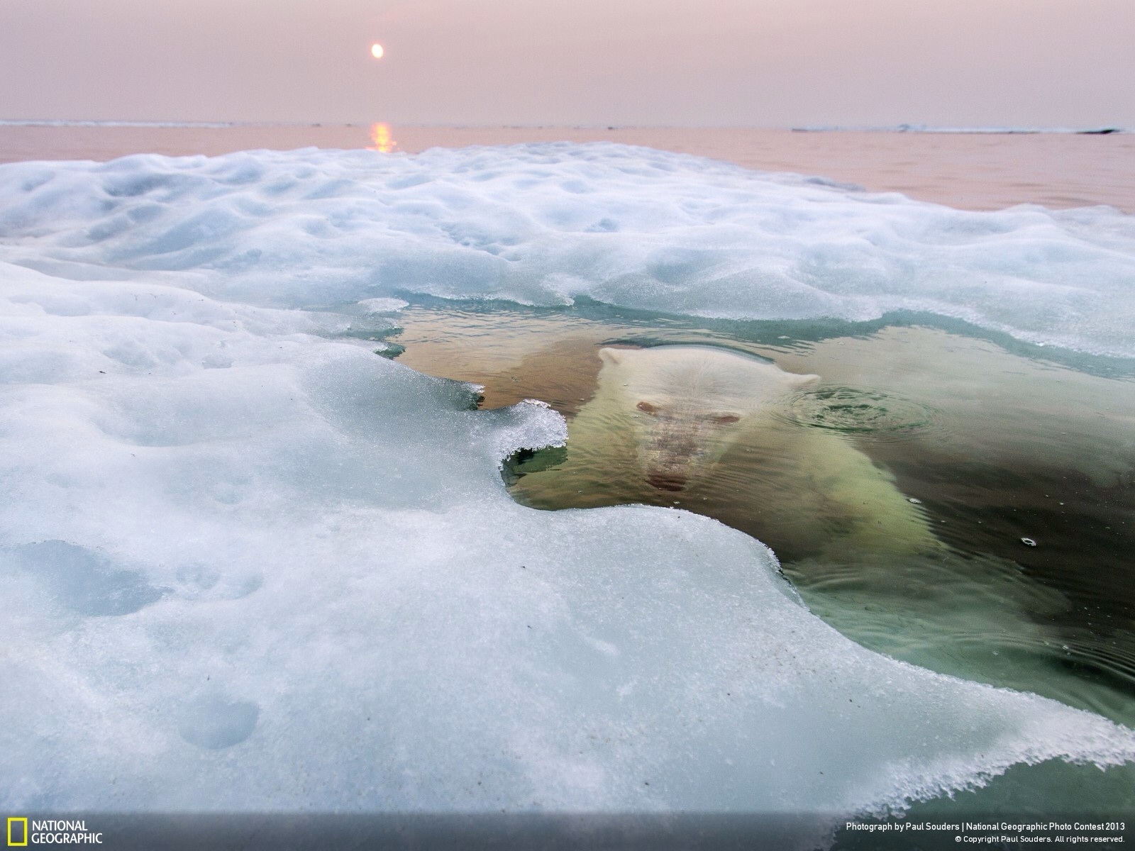 Waiting bear. Photo by Paul Souders.