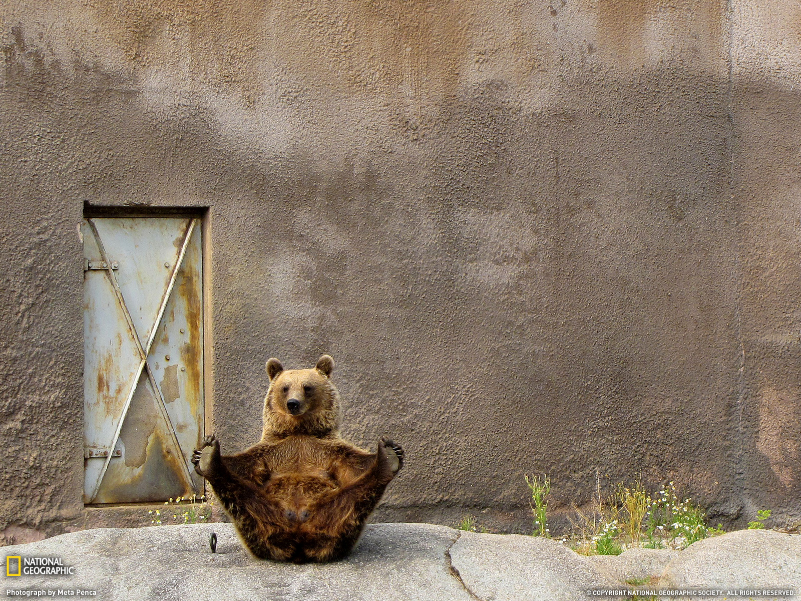Happy bear. Photo by Meta Penca.
