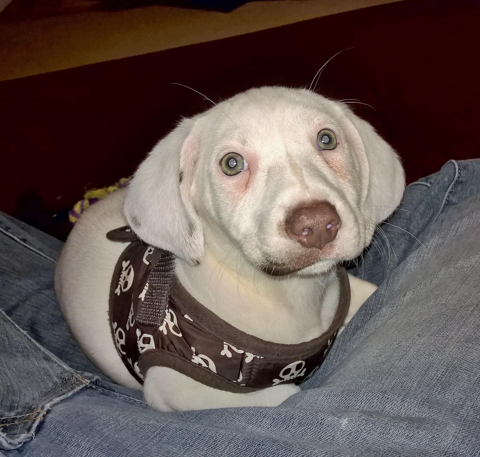 Gratuitous sad puppy photo