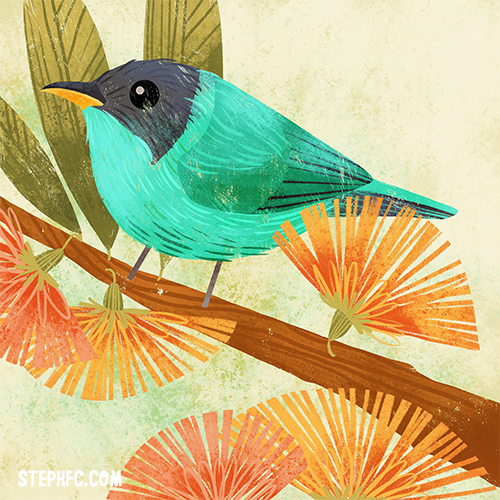 green honeycreeper_STEPHFIZERCOLEMAN.jpg