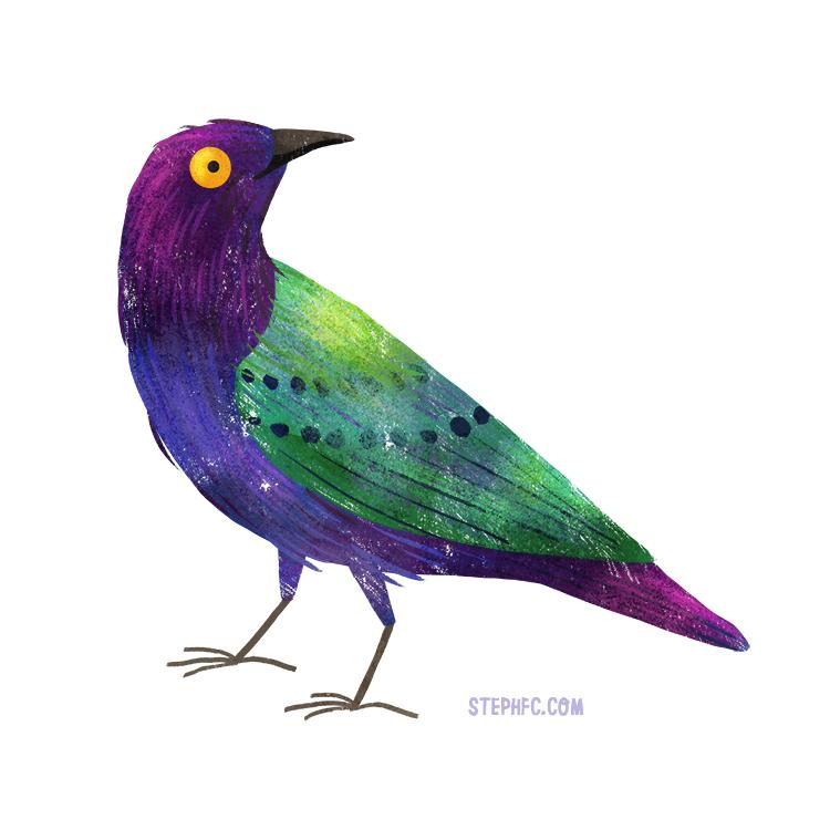 purple glossy starling.jpg