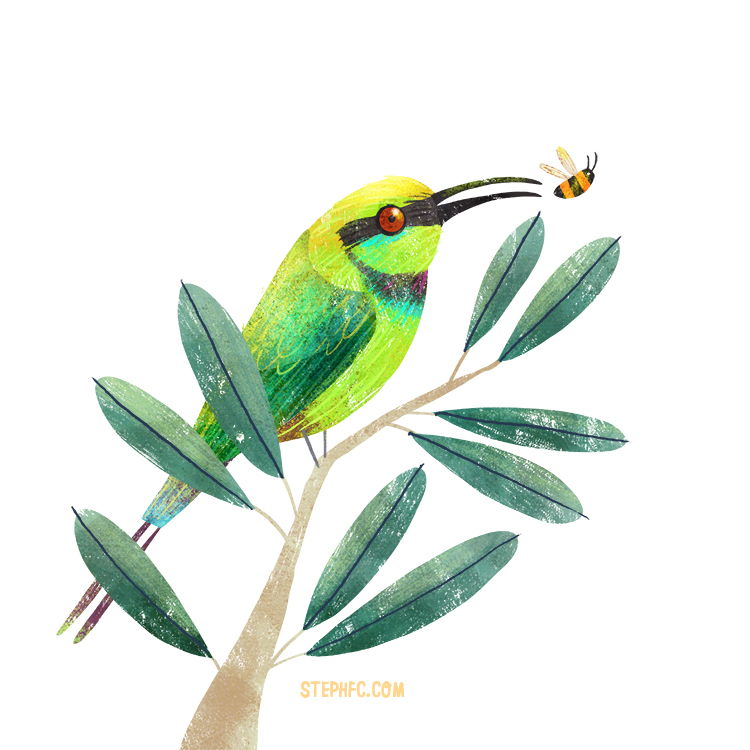 rainbow bee-eater.jpg