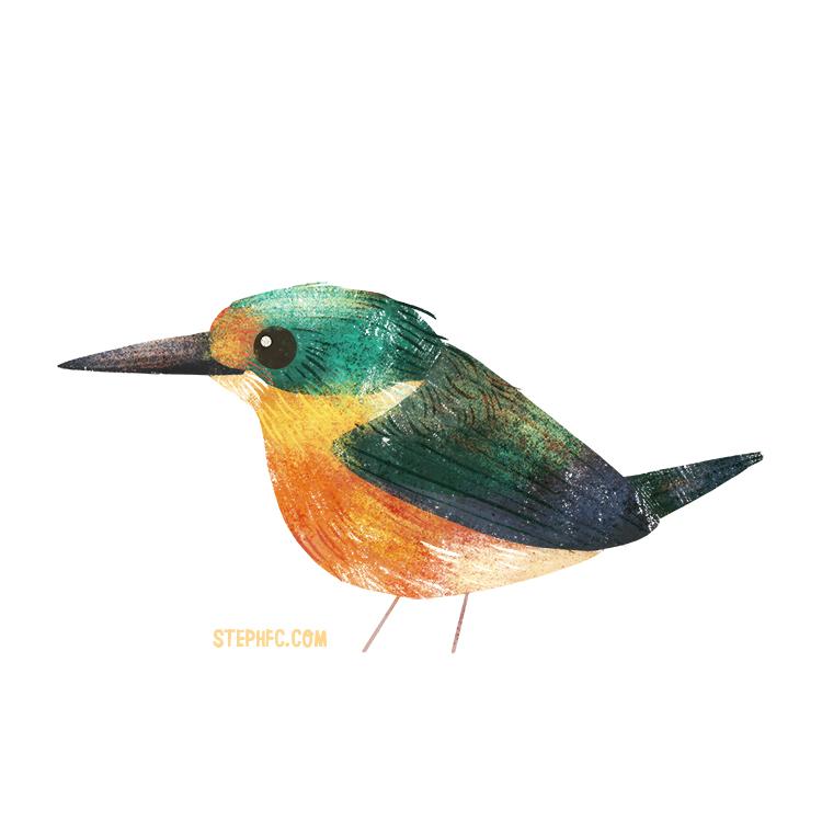 American pygmy kingfisher.jpg