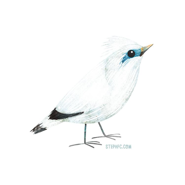 bali starling.jpg