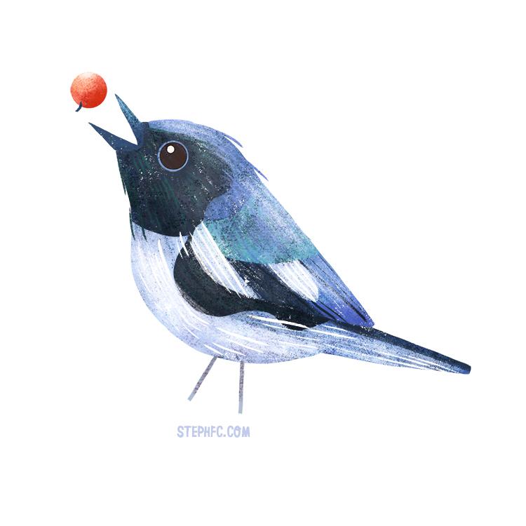 black throated blue warbler.jpg
