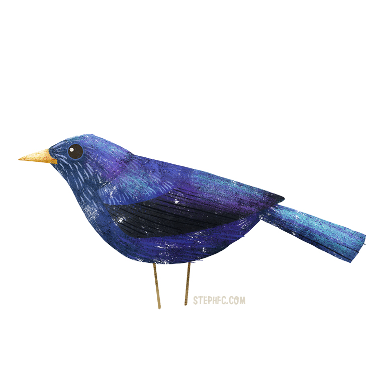 blue whistling thrush.jpg